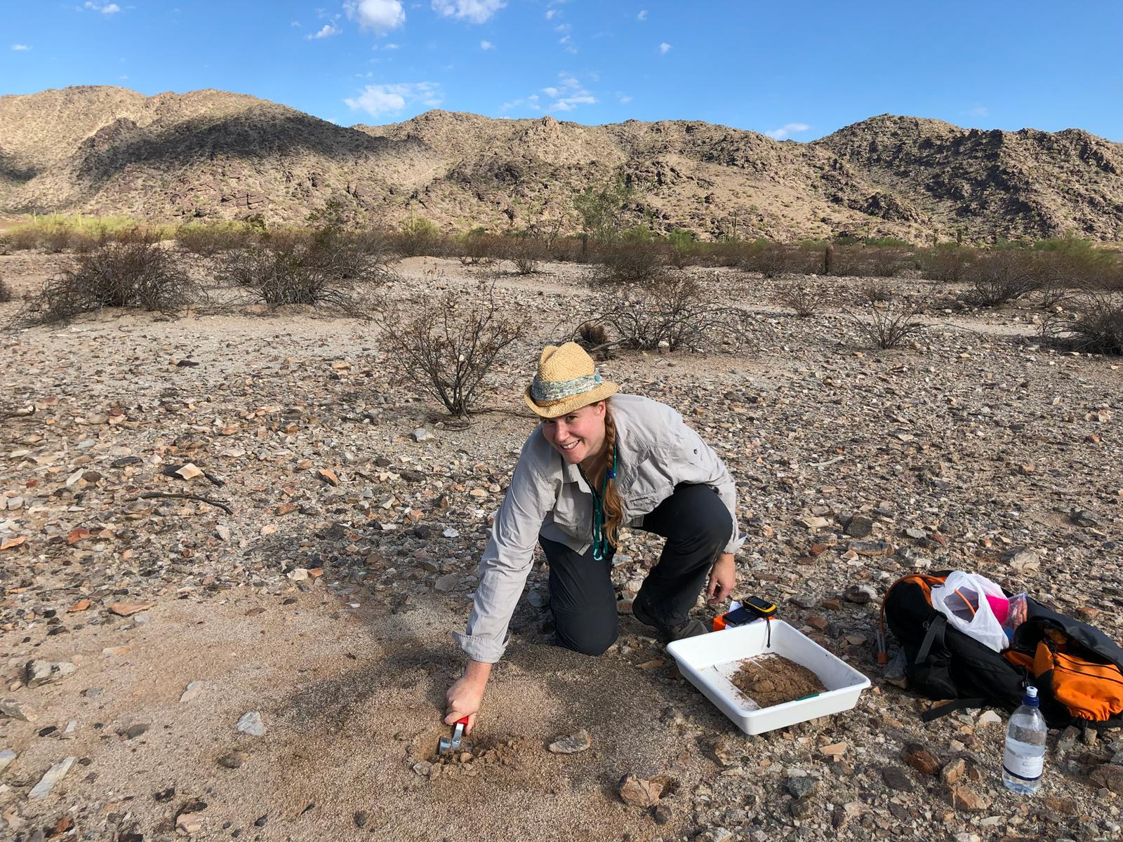 sampling ants in Arizona desert